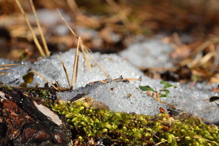 thaw: The spring thaw. Snow and moss. Spring.