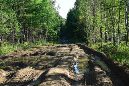 marshy: Impassable road in the dense marshy forest in Siberia