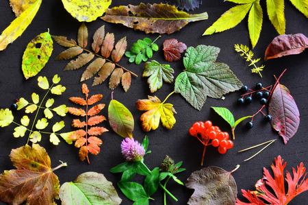 Herfstcollectie. Een patroon van de herfstbladeren van verschillende bomen en grassen. Op een donkere achtergrond