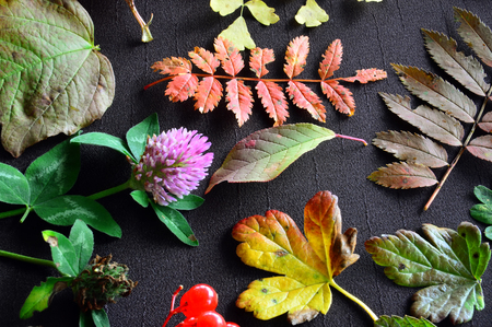 Pattern on a dark background of leaves, flowers and berries. Autumn still-life.