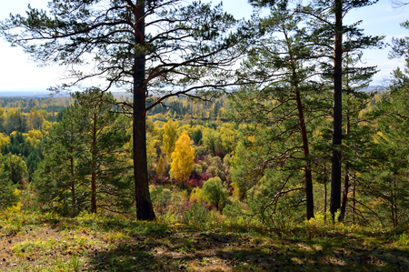 Autumn forest landscape. Wildlife. Sunny day. Wood from different trees. Siberia. Russia.