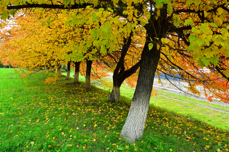 Autumn in the city. Trees in the park with beautiful autumn leaves. Fallen leaves on the green grass. Beautiful decay