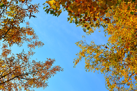 Background. Yellow sky and sky blue. Autumn mood. Standard-Bild - 118764479