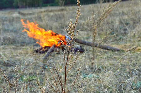 A branch of last year?s fire. Spring landscape.