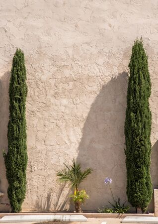 ancient white wall with rough plaster texture framed with two cypress trees