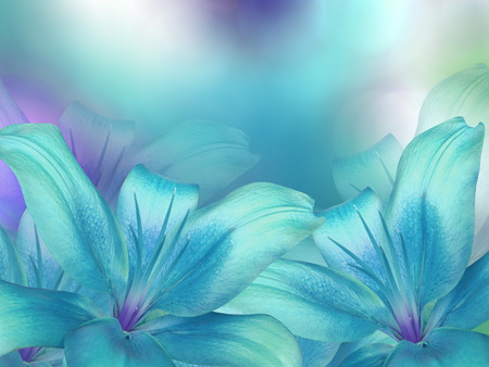 blue- turquoise lilies  flowers,  on turquoise-purple-blue blurred background .  Closeup.  Bright floral composition card for the holiday.  Nature. Фото со стока