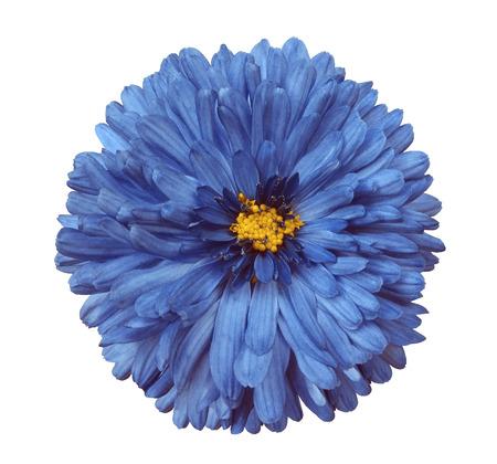 Blue flower white isolated background with clipping path closeup blue flower white isolated background with clipping path closeup no shadows yellow mightylinksfo