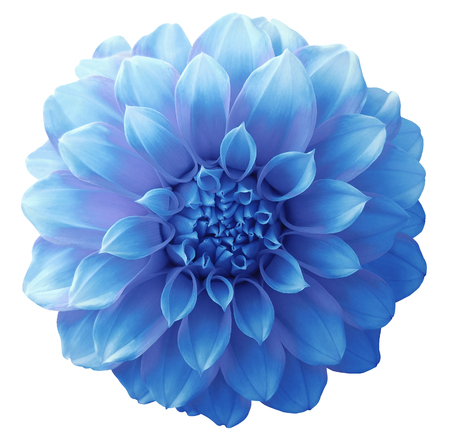 Dahlia light blue  flower ,variegated flower, white background isolated  with clipping path. Closeup. with no shadows. for design. Imagens