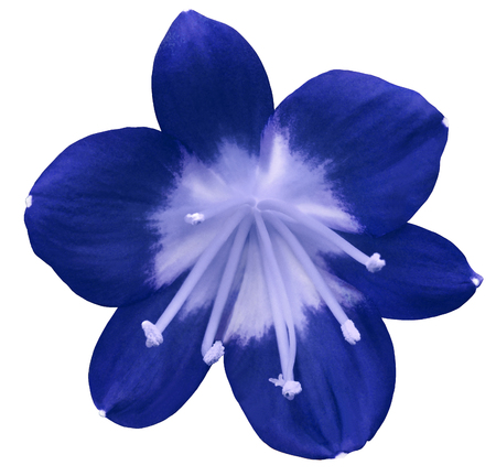 Lily blue flower isolated with clipping path on a white background lily blue flower isolated with clipping path on a white background light blue mightylinksfo