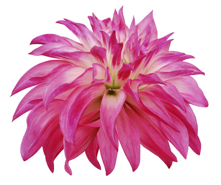 pink big  flower  on a white isolated background Stock Photo