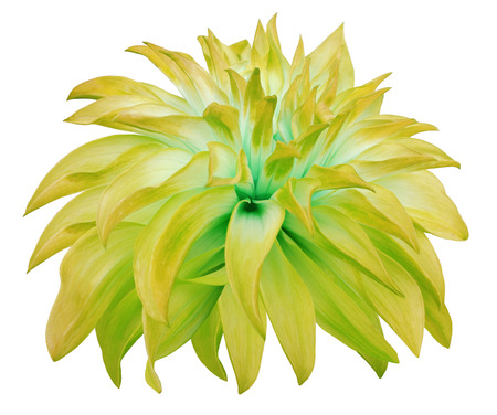 big flower: yellow big  flower  on a white isolated background Stock Photo