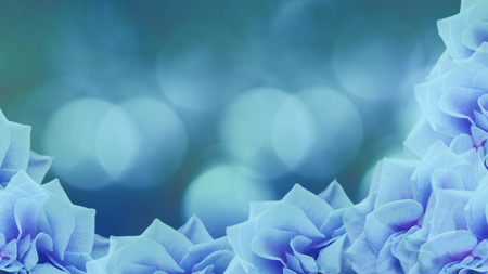 papel tapiz turquesa: turquoise-blue roses flowers  on blurred turquoise-blue background. floral background. turquoise wallpaper for design. Nature.