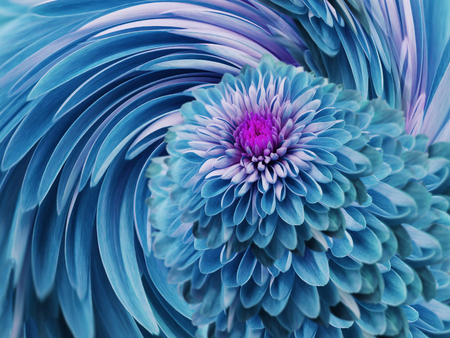 turquoise-blue flowers  chrysanthemum.  blue-turquoise background. floral collage. flower composition. For design. Stock Photo
