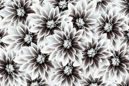 Flowers dahlias black white flowers background floral collage flowers dahlias black white flowers background floral collage flower composition nature mightylinksfo