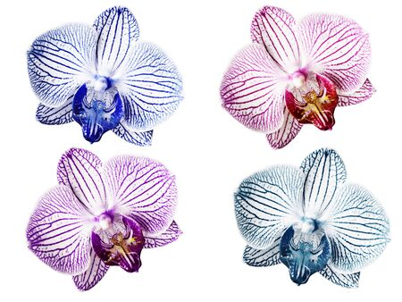 Set Orchids blue-white pink-white violet-white turquoise-white  flowers. isolated on white background with clipping path.  Closeup. Motley brindle  flowers.  Nature.