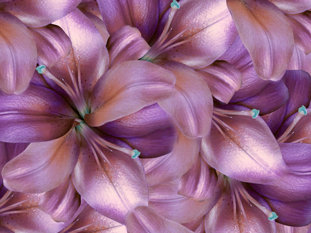 lily flowers.  bright pink-violet  background. floral collage. flower composition. Nature. Stock Photo
