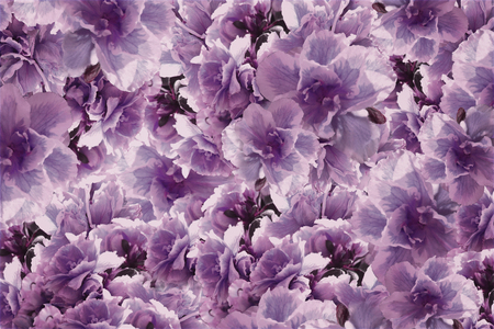 Vintage  roses  violet-pink-brown  flowers.  flowers  background.   floral collage.  Flower composition.  Nature.