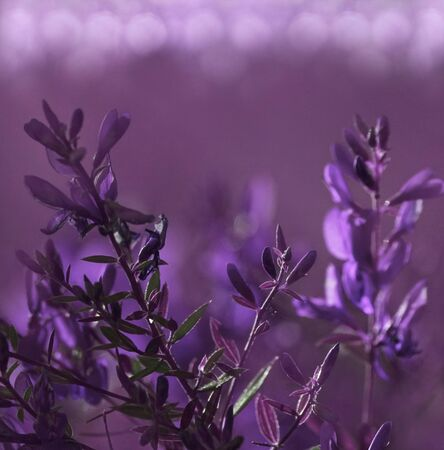 Flowers forest. Floral beautiful violet-pink background boke. Purple flowers  in a clearing . Closeup. Nature.   Stock Photo