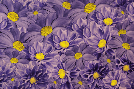 Floral violet background of dahlias bright flower arrangement floral violet background of dahlias bright flower arrangement a bouquet of purple yellow mightylinksfo