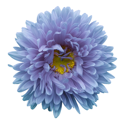 Turquoise-violet flower Aster on a white isolated background with clipping path. Flower for design, texture,  postcard, wrapper.  Closeup.  Nature.  Stok Fotoğraf