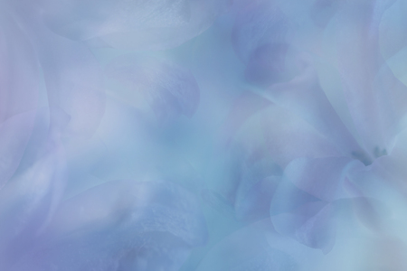 Violet-blue background with petals of  flowers. Close-up. Nature.