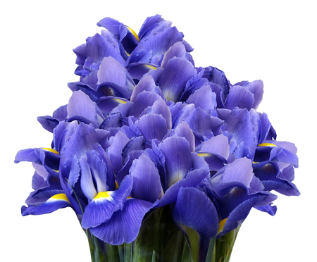A bouquet of spring flowers of blue irises on a white isolated background. Close-up. Nature.