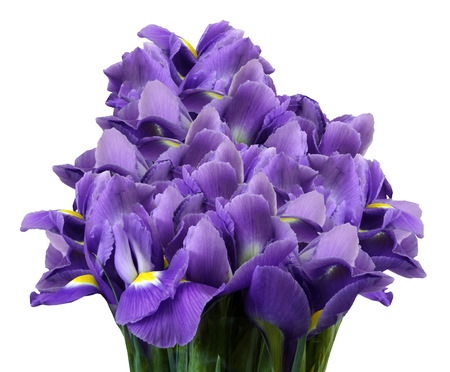 A bouquet of spring flowers of violet irises on a white isolated background. Close-up. Nature. Stock Photo
