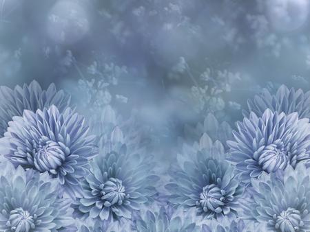 Flowers  on blurry  blue background bokeh. Blue  flowers chrysanthemum.  Floral composition. Nature.    Reklamní fotografie