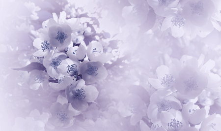Soft  light violet-blue  floral background. Flowers of a cherry on a  pink-white halftone background. Close-up. Greeting card. Nature.