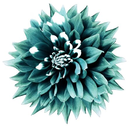 turquoise-teal flower. White isolated background