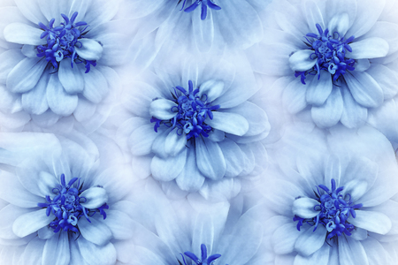 Floral  watercolor white-blue background. Flowers daisies close-up on a  light blue background.  Flowers composition. Nature.