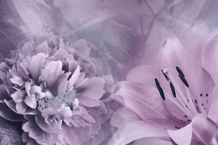 Floral background of  lily and peony.  Flowers close-up on a  light purple-pink  background. Flower composition. Nature.