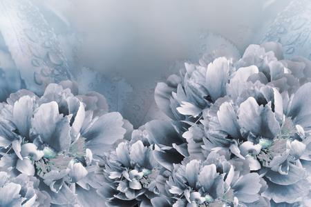 Floral background white-blue  peonies.  Flowers close-up on a light blue  background. Flower composition. Nature. Reklamní fotografie