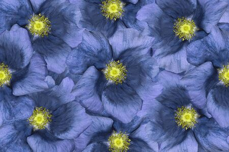 Floral  background . Blue flowers.  Floral collage.  Flower composition. Closeup.  Nature.