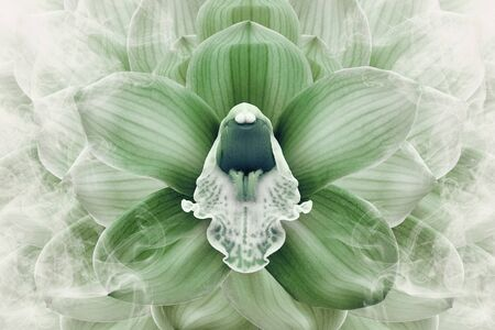 Floral halftone  green and white background. Flower and petals of a green orchid close up. Nature.