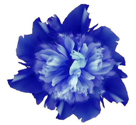 Watercolor flower blue peony.  on a white isolated background