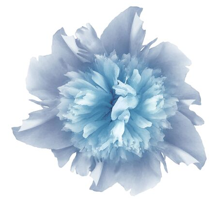 Watercolor flower  light blue peony.  on a white isolated background Imagens