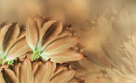 flowers tulups on background orange. Orange  flowers tulups. floral background.  Flower composition. Nature. Reklamní fotografie
