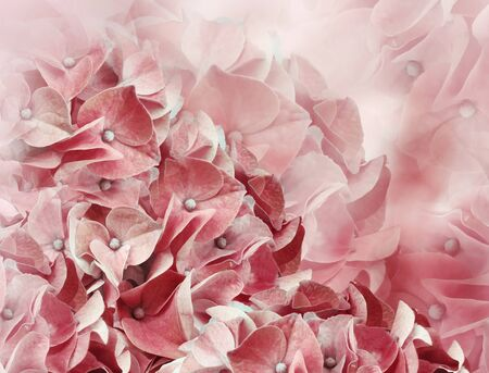 hydrangea flowers. red background. floral collage. flower composition. Close-up. Nature.