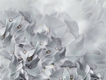 hydrangea flowers. light gray background. floral collage. flower composition. Close-up. Nature. Фото со стока