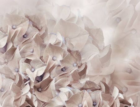 hydrangea flowers. light brown background. floral collage. flower composition. Close-up. Nature.