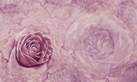 Floral  purple  background. Flowers and rose petals. Flower composition. Place for text. Greeting card. Nature. Фото со стока