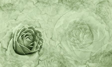 Floral  green background. Flowers and rose petals. Flower composition. Place for text. Greeting card. Nature. Фото со стока