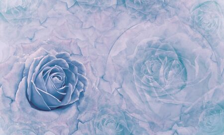 Floral  blue background. Flowers and rose petals. Flower composition. Place for text. Greeting card. Nature. Фото со стока
