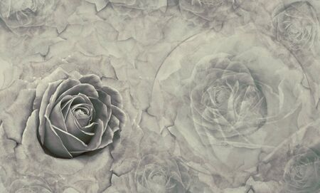 Floral gray background. Flowers and rose petals. Flower composition. Place for text. Greeting card. Nature.