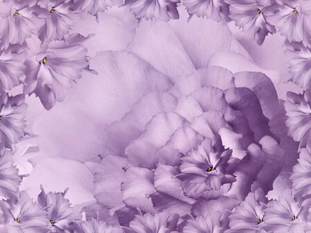 Floral purple background. Flowers and petals of a purple roses.  Close-up. Nature.