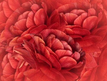 Floral red  background. A bouquet of red flowers.  Close-up.   floral collage.  Flower composition. Nature.