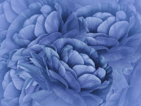 Floral   blue  background. A bouquet of blue flowers.  Close-up.   floral collage.  Flower composition. Nature.