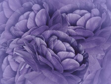 Floral   violet background. A bouquet of  purple flowers.  Close-up.   floral collage.  Flower composition. Nature.    Фото со стока
