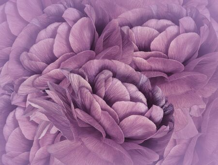 Floral  pink background. A bouquet of  purple flowers.  Close-up.   floral collage.  Flower composition. Nature.